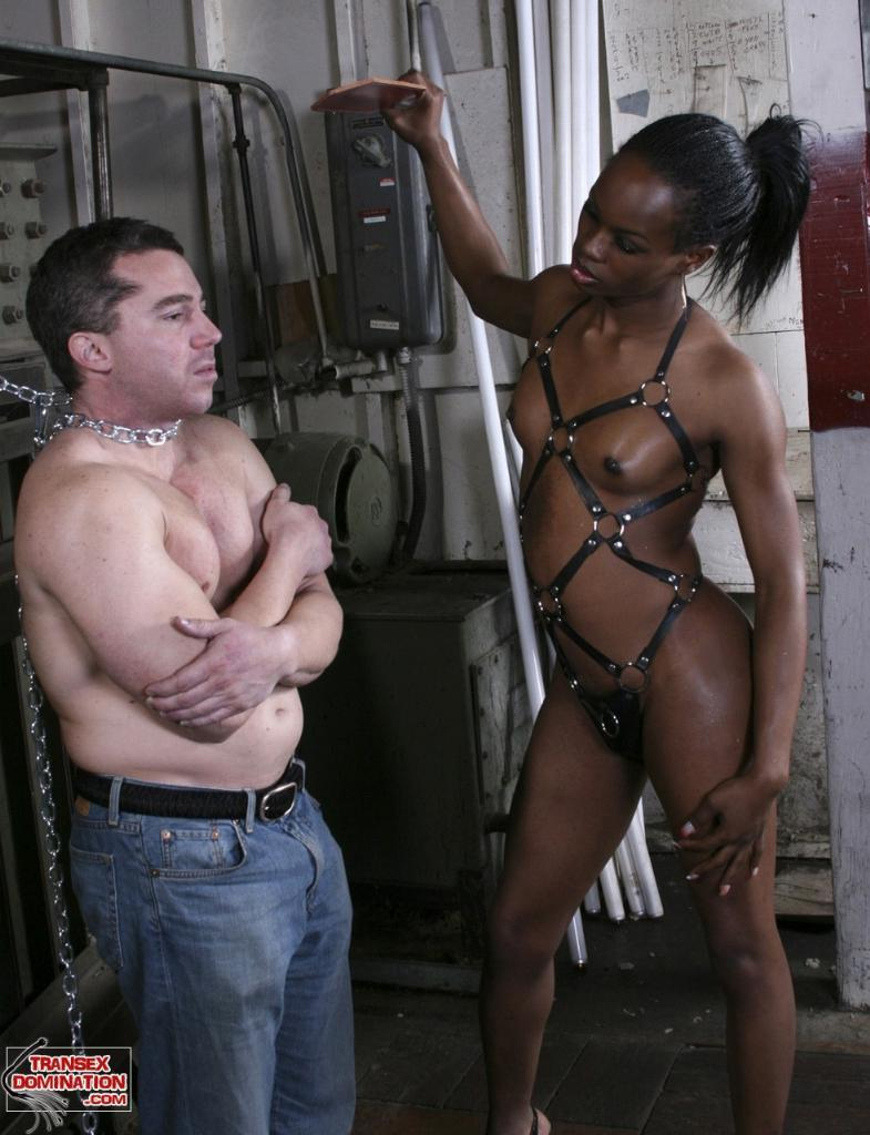 Free Shemale Bdsm Porn Tube Movies & Free Shemale Bdsm